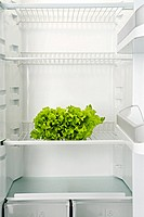 The bunch of green fresh salad lays in an empty refrigeratorThe bunch of green fresh salad lays in an empty refrigerator