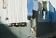 Dog and drying up linen in small city streetDog and drying up linen in small city street