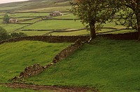 Stone Wall in Yorkshire