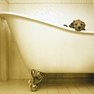 Puppy in a bath tub