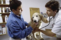 Male veterinarian examining a dog with a man