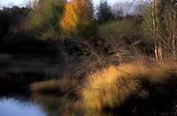 Autumn beside river, near Duncan, Vancouver Island, British Columbia, Canada