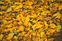 Close_up of leaves fallen on the ground