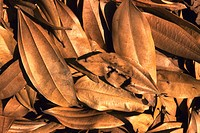 Close-up of a pile of dry leaves (thumbnail)