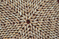 Close_up of a pattern made with seashells