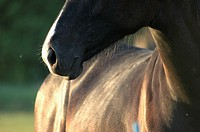 Close_up of a horse