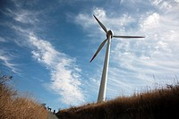 Windmill turbines generating clean electric power