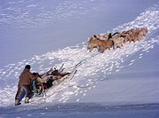 Dog sledging on the western coast of Greenland, close to Sisimiut.
