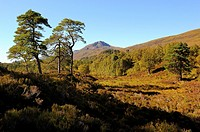 Glen Affric. Scotland. Great Britain.