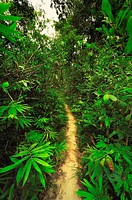 A tropical rainforest is a biome found 100 degrees north or south of the equator  They are common in Asia, Australia, Africa, South America, Central A...
