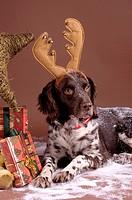 Christmassy costumed Muensterlaender, studio shot