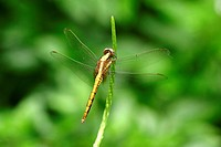 Close_up of dragonfly
