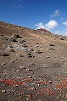 Volcanic landscape near El Golfo, Lanzarote, Canary Islands, Spain