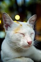 Close_up of cat