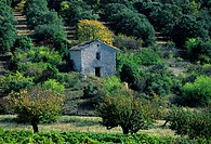 Luberon, France, Provence, Vaucluse, trees, house, home, ruins, autumn