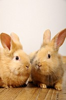 Stock photo of two rabbits apparently having a little chat with each other