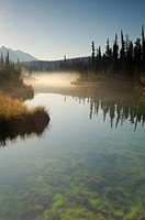 Sunrise along the banks of a stream in Jasper National Park, Alberta, Canada