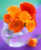 Marigolds or Calendula in a glass vase