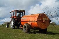 TRACTOR FARMING Massey Ferguson 240 Tractor pulling dung spreader