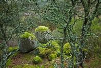 Sierra de Andújar Natural Park. Jaén province. Andalucía. Spain.