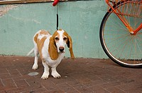 A leashed dog waits near a bicycle