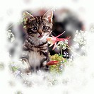Portrait of tabby kitten among spring flowers with Columbine.