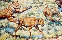 American Lion Panthera leo atrox females attacking bison calf, from the Pleistocene age Ice Age of North America.