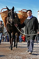 A donkey loaded, peasant, Festes dels Traginers ´10, Balsareny, Catalonia, Spain.