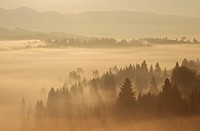 landscape in fog in carpathian mountains in the ukraine