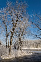 Frost covered trees and frozen mille iles river