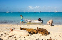 Woman with wild pigs on Big Majors Cay, Exumas, Bahamas