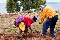 An elderly man and woman plant potatoes on a field on Taquile Island in Lake titicaca, Peru, South America