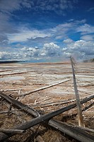 USA, Wyoming, Yellowstone National Park, Grand Prismatic Spring with fallen trees