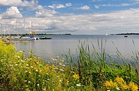 Wildflowers and sailboats at Gosport Marina on Presquile Bay Lake Ontario near Brighton