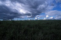 Gray Clouds In A Blue Sky Over A Green Grassy Plain