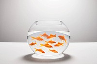 Large group of goldfish in bowl