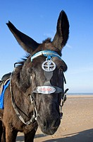 Donkey on Blackpool beach