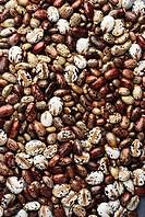 Castor seeds , India