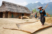 Man in rural Loas village manually winnowing the chaff from the hill rice harvest