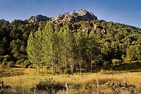 Sierra de Grazalema, Cadiz province, Andalusia, Spain