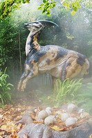 Parasaurolophus belonds to the duck-billed dinosaur group, from the late Cretaceous period  Goes to a length of 39 feet and weighted upto 3 tons  Was ...