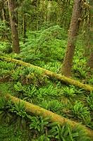 Spring rainforest