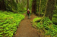 Hiker in spring rainforest