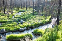 A stream runs through lush vegetation near McCall, Idaho. USA