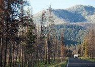 A camper travels down the road cut through a forest near McCall, USA