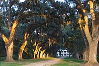 A Louisiana dream: an old oak alley leads towards Rosedown Plantation, St. Francisville, Louisiana, USA