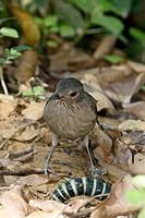 Birds, Nature, Trindade, Rio de Janeiro, Brazil
