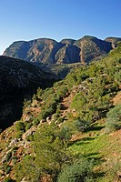 Morocco, Central Morocco, Cascades d´Ouzoud  The exposed terrain of the gorge, provides a habitat for various plants