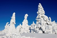 Snow-covered trees, Arber Mountain, Bavarian Forest National Park, Germany, Europe