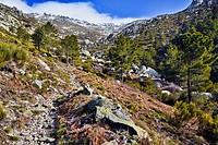 Las Losillas  Sierra de Gredos  Castilla León  España